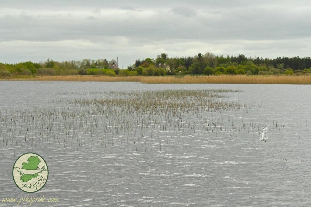 irlanda-e-pesca