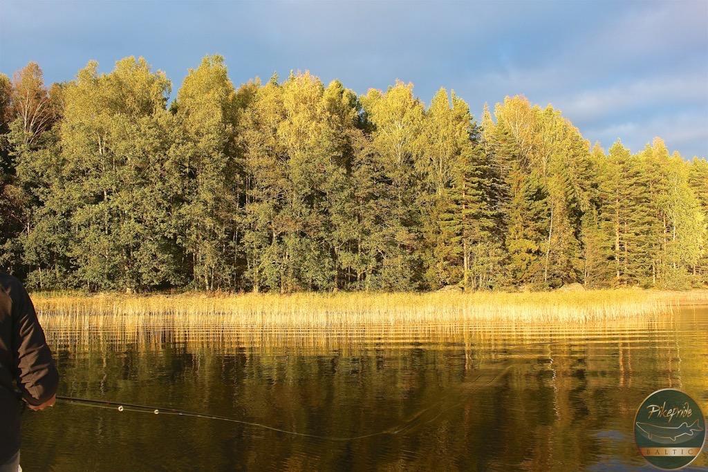 pesca-a-mosca-in-finlandia