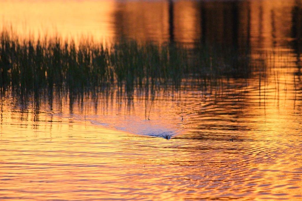 pesca-topwater